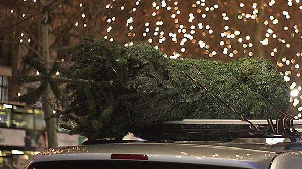 Christmas tree selection and transportation