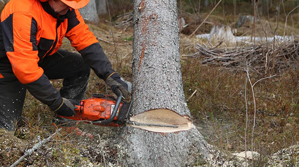 Tree disease treatments includes tree removal for more advanced infections