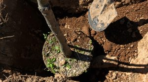 Tree Expert Shares 5 Important Tree Planting Tips