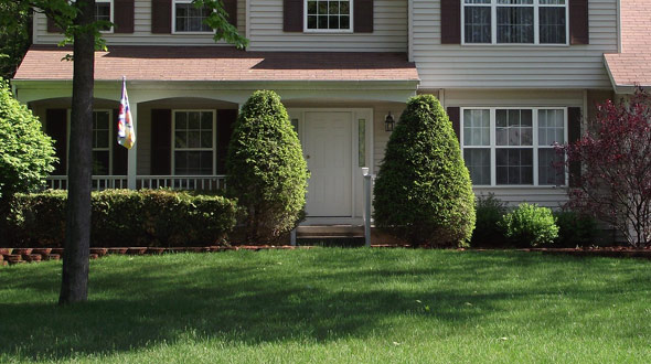 low maintenance evergreen trees for your Marietta Ga yard