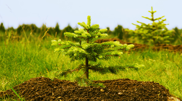 Keeping trees healthy through nutrient rich soil and appropriate watering