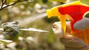 Tree pest control homemade insecticidal soap spray