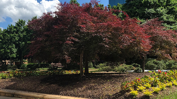 How to protect trees with mulch proper planting location and wind protection