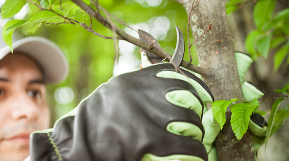 arborist pruning trees for spring tree care