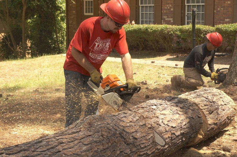 marietta tree cutting service