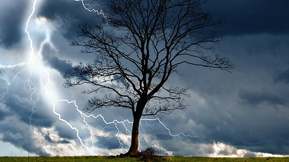 Tree hazard assessment to prevent property damage during storms
