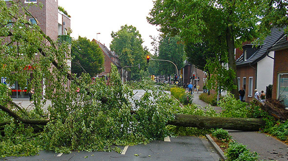 Hazard assessment to prevent tree damage or failure during severe weather