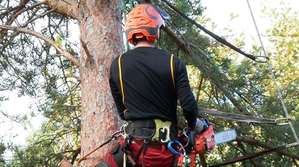 Spring tree pruning is often necessary to remove disease or dead wood