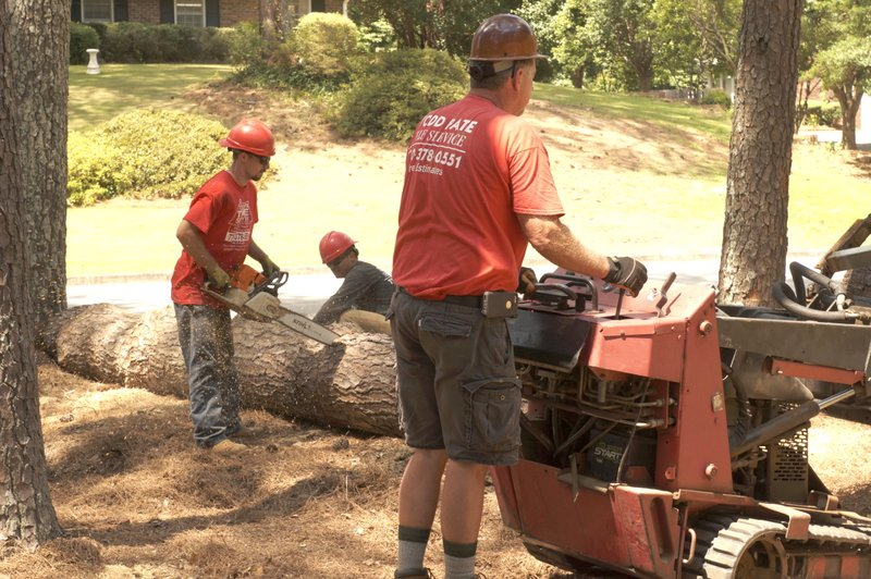 Todd S Tree Service In Marietta Ga Free Estimates Emergency Tree Removal Trimming And Cutting Affordable Tree Removal Service In Marietta Ga