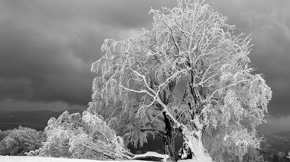Hazard assessment to prevent tree damage or collapse under snow and ice weight