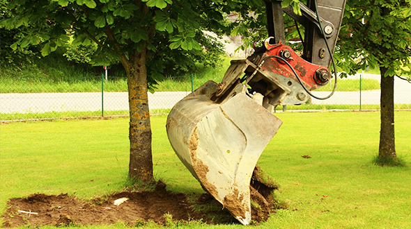 Tree root ball excavation for transplanting