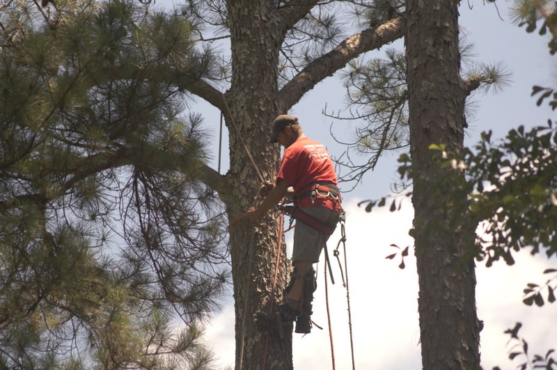 tree trimming marietta ga pruning