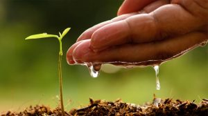 Tree Watering and Soil Fundamentals