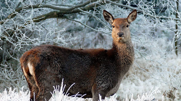 Winter tree protection from wildlife grazing